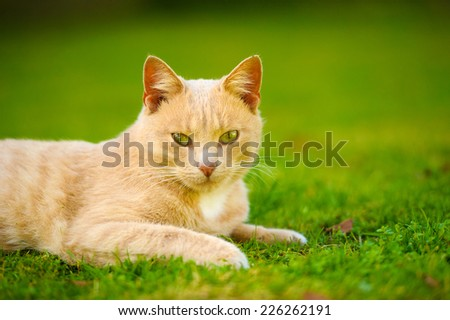 Funny cat on green grass