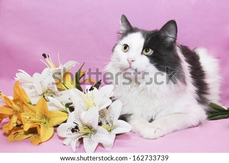 Funny cat on pink background - stock photo