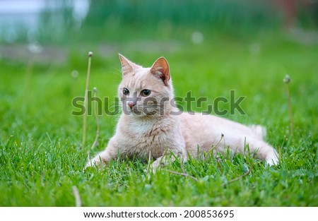 Funny cat on the green grass