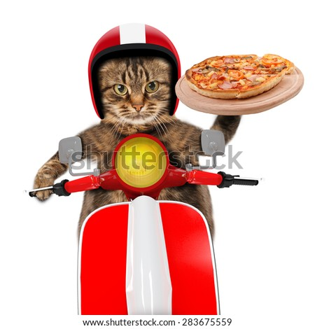 Funny cat. Pizza delivery - stock photo