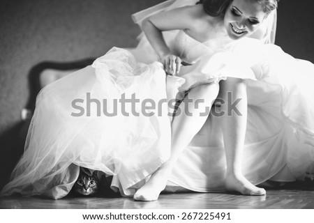 funny cat sitting under beautiful brides dress, wedding morning - stock photo