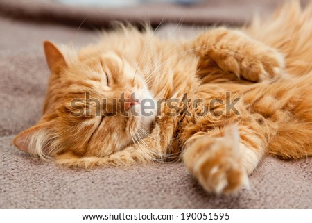 funny cat sleeping - stock photo