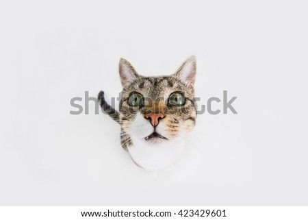 Funny cat Surprised  sitting and looking to camera isolated on black background.Close-up funny cat. - stock photo
