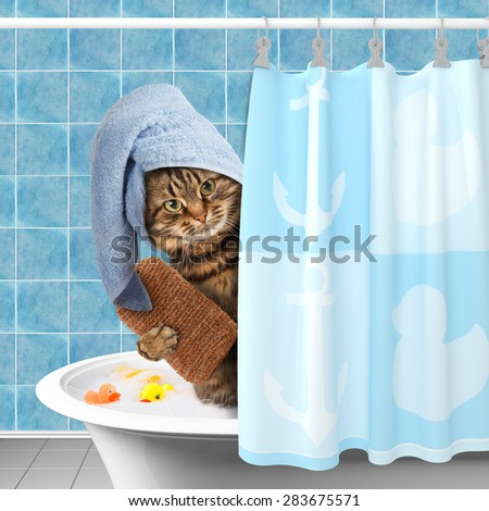 Funny cat taking a bath. - stock photo
