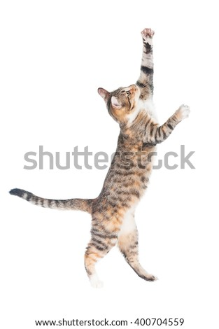 Funny cat walking on its hind legs isolated on white - stock photo