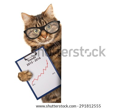 Funny cat with a folder for presentations. Business scene. - stock photo
