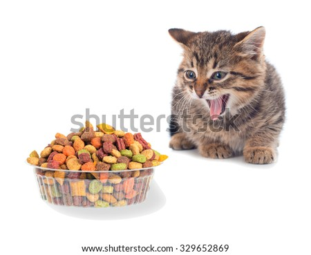 Funny cat with appetite eats cat dry food. Isolated. - stock photo