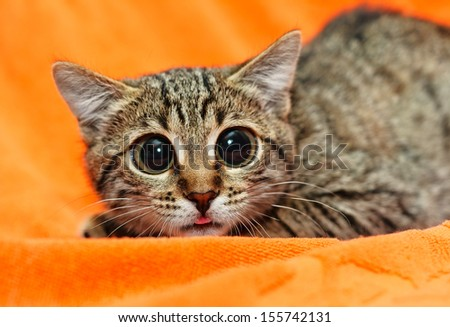 Funny Cat with big eyes on orange background - stock photo