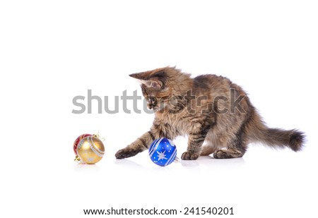 Funny cat with Christmas toys isolated on white - stock photo