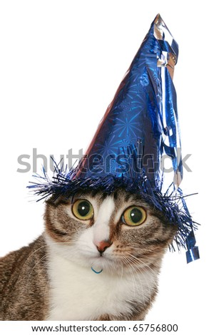Funny cat with expressive eyes in a festive hat - stock photo