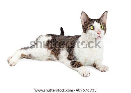 Funny cat with eyes crossed looking to side while laying over white