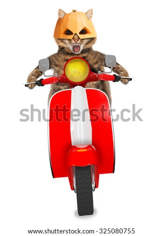 Funny cat with fangs in halloween mask driving a moped on white background - stock photo