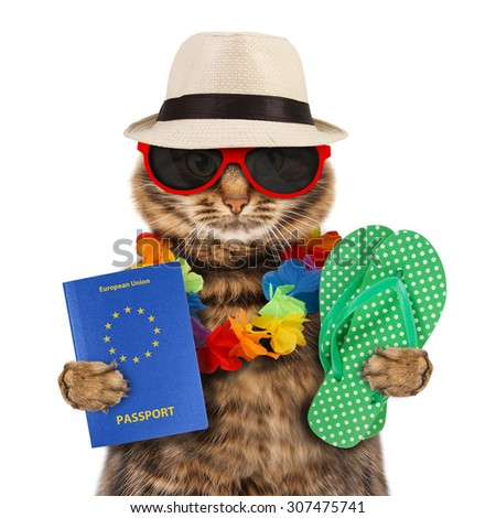 Funny cat with passport and flip flops - stock photo