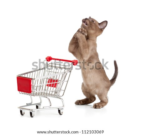 Funny cat with shopping cart begging to buy something