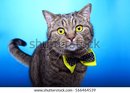 Funny cat with yellow bow-tie - stock photo