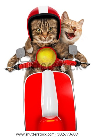 Funny cats - driving a moped. Humorous theme. Two cat driving a moped. - stock photo