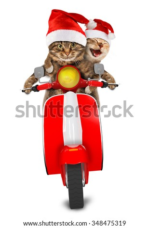 Funny cats - driving a moped. Humorous theme. Two cat in christmas hat driving a moped. - stock photo