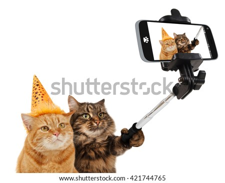 Funny cats - Selfie picture. Selfie stick in his hand. Funny cats are taking a selfie with smartphone camera. Funny cats are celebrating the birthday. Selfie party .  - stock photo