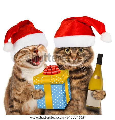 Funny cats with christmas hat. Funny cats celebrate Christmas. - stock photo