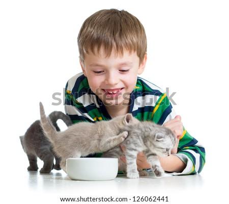 funny child boy feeding cats kittens - stock photo
