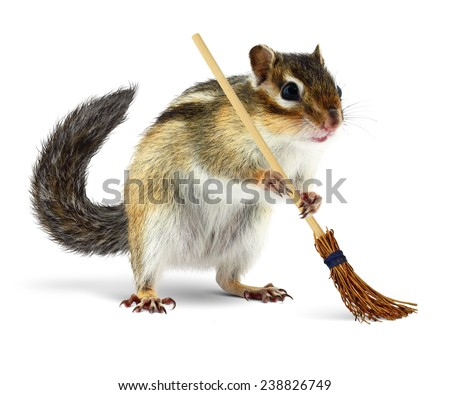 Funny chipmunk cleaner holding broom isolated on white background - stock photo