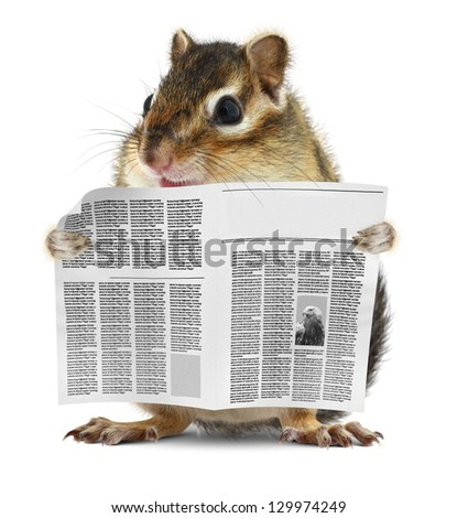 Funny chipmunk read newspaper, news concept - stock photo