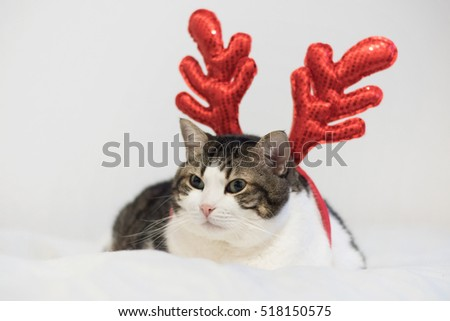 Funny christmas rudolph reindeer cat, lying on a blanket.