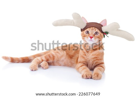 Funny Christmas Rudolph reindeer pet cat - stock photo