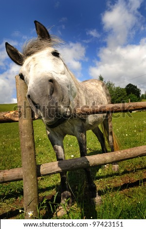 Funny closeup of a horse looking at the camera - stock photo