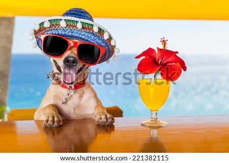 funny cool chihuahua dog drinking cocktails at the bar in a  beach club party with ocean view - stock photo