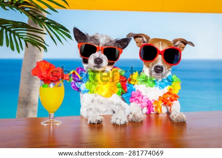 funny cool couple of  dogs drinking cocktails at the bar in a  beach club party with ocean view on summer vacation holidays for honeymoon trip