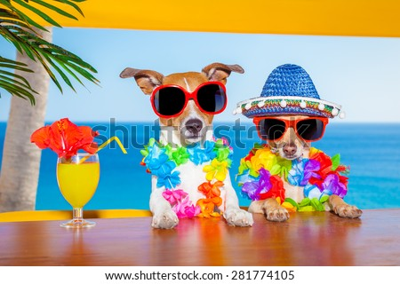 Drunk dog stock photos images pictures shutterstock for Cool vacations for couples