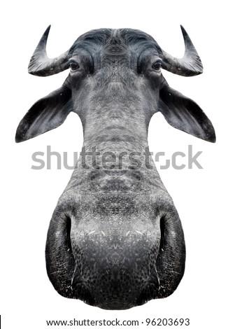 Funny cow - stock photo