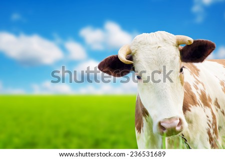 Funny cow on a green summer meadow. Blurred background - stock photo