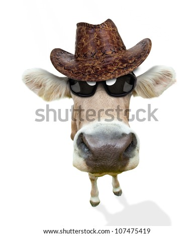Funny cow portrait, isolated on white background - stock photo