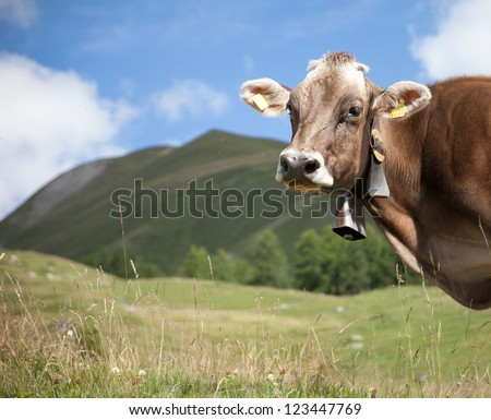 funny cow with field of fresh grass, big mountains and blue sky in background (shallow DOF; soft color; place for text) - stock photo