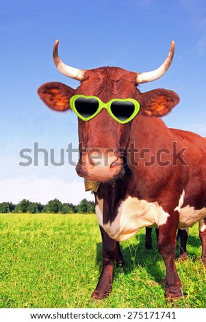 funny cow with green spectacle, on the meadow - stock photo