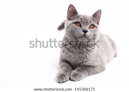 Funny curious animal/charming young cat - stock photo