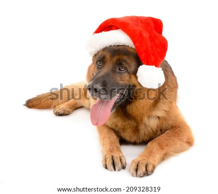 Funny cute dog in Christmas hat isolated on white - stock photo