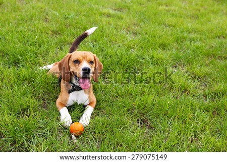 Funny cute dog in park - stock photo