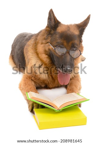 Funny cute dog with books isolated on white - stock photo