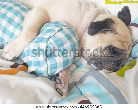 Funny cute puppy pug dog sleep resting on one's side cuddling bolster - stock photo