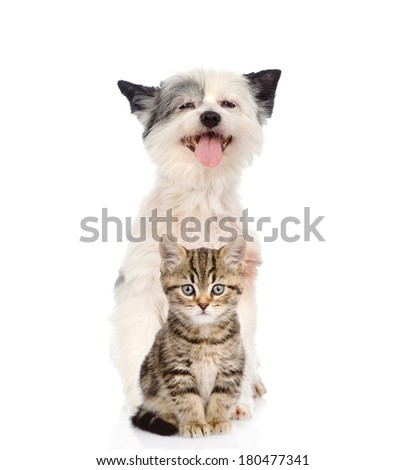 Funny dog and Scottish kitten. looking at camera. isolated on white background