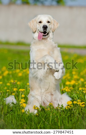 funny dog begging - stock photo