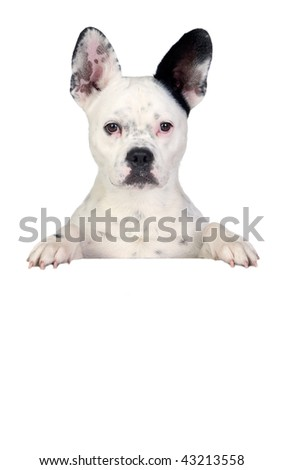 Funny dog black and white on white poster - stock photo