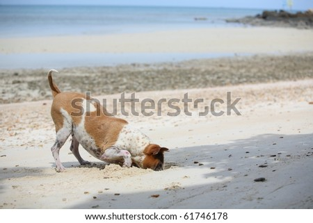 funny dog digging until head in sand, on the beach