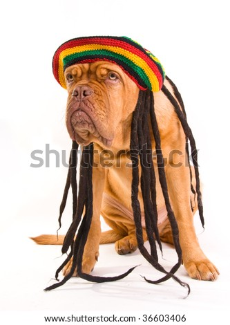Funny Dog in Rastafarian Hat with Dreadlocks - stock photo