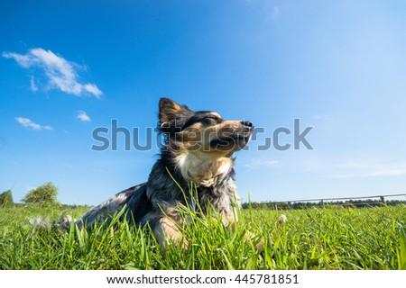 funny dog in sunny day,  - stock photo
