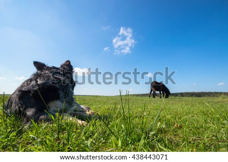 funny dog in sunny day, animals series - stock photo