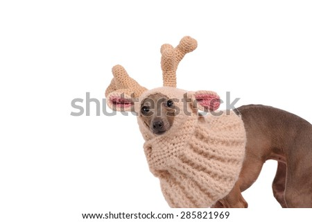 funny dog in the deer  hat isolated over white background - stock photo